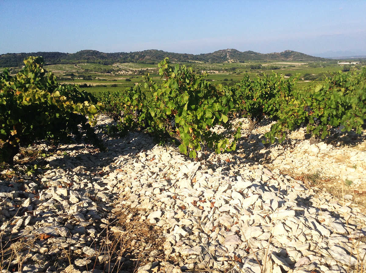 Terroir des Lauzes Tavel